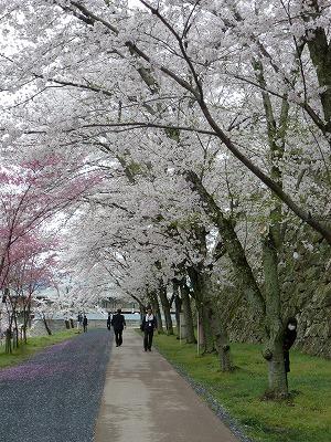 通りには桜並木が立ち並び、訪れる人を出迎えてくれます。