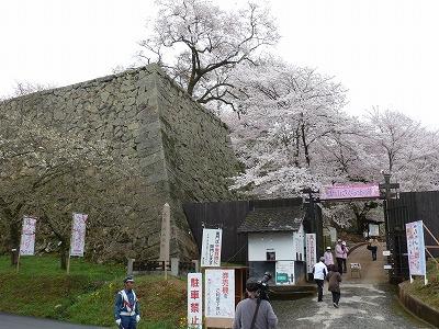 満開を迎えたこの日は、「津山さくらまつり」の期間中とあって、朝8時着でも多くの人が訪れていました。
